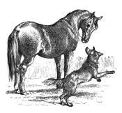 Wolf  and nurse